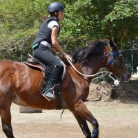 Horse Cantering in St Lucia