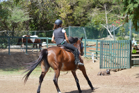 Horses enjoy Canter in St Lucia