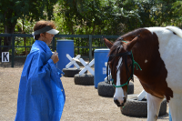 Exercising Horses in St Lucia