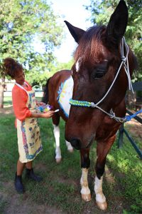 Painting Horses in Saint Lucia