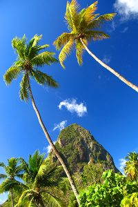 Climb the Pitons in St Lucia